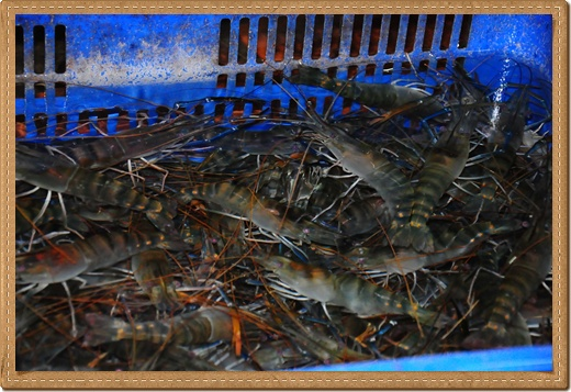 活蝦餐廳,新竹聚餐餐廳,新竹海鮮餐廳,新竹餐廳,新竹美食,朋友聚餐餐廳,竹北好吃餐廳,竹北聚會食記,新竹景點,