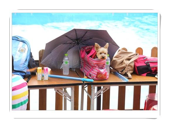 台中外燴點心推薦,台中活動buffet外燴,外燴活動點心推薦,歐式外燴服務,台中,外燴,外燴公司,台中外燴,外燴辦桌,外燴服務,外燴推薦,雞尾酒茶會,外燴自助餐,歐式外燴,活動點心,雞尾酒會,素食外燴,雞尾酒外燴